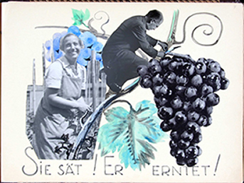 Collage of Hertha helping Robert prune grapes
